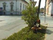 Reifes Amateur Luder pisst an einen Baum
